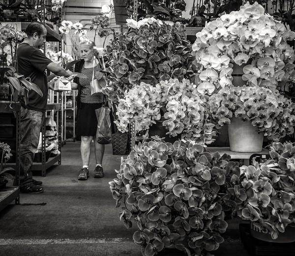 orchid-dealer